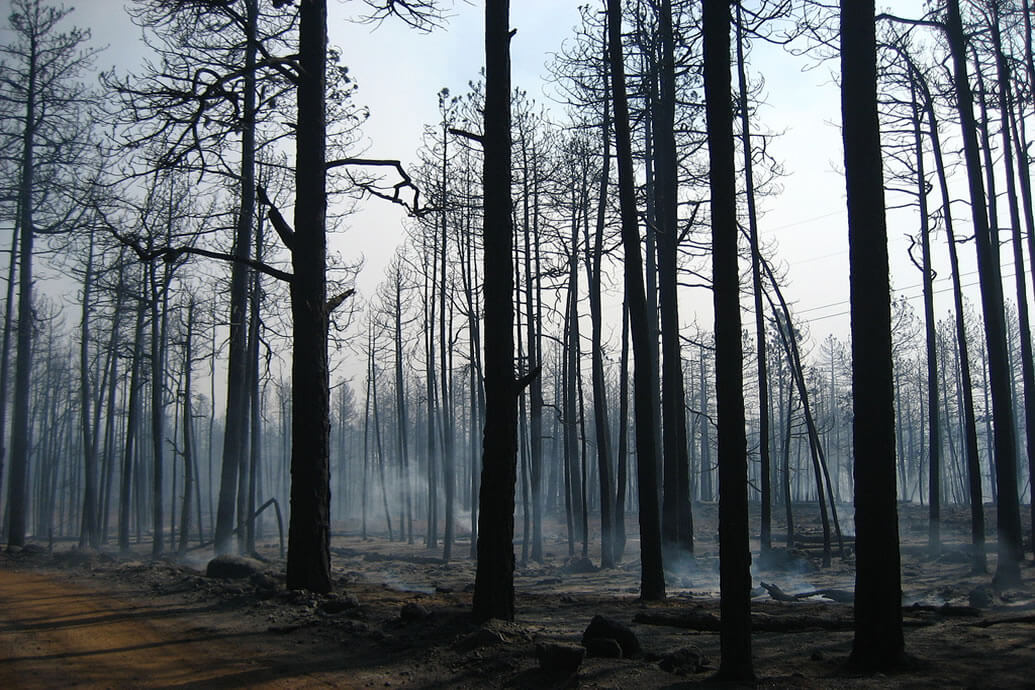 Impact of Climate Change on Forest Fire Risk in Sweden