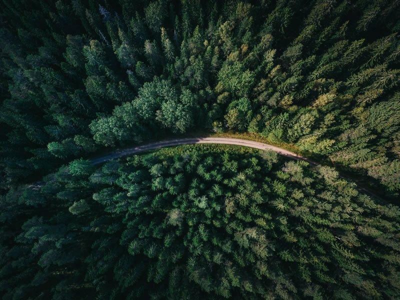 Making Forestry Safer